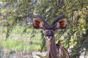 Kudu – Boleti River
