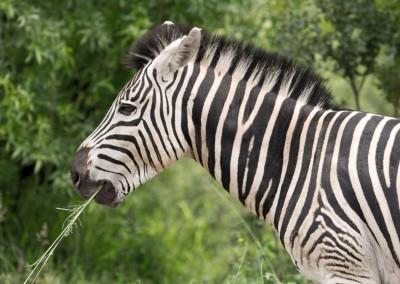 Simbabwe, Botswana, Südafrika 2015