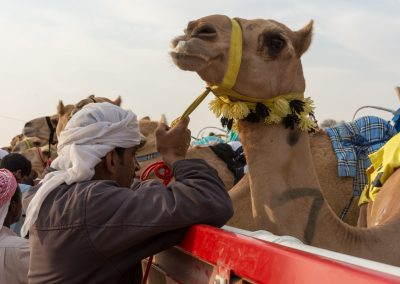 Kamelrennen - Zwiesprache