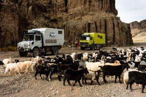Gobi Canyon Camping