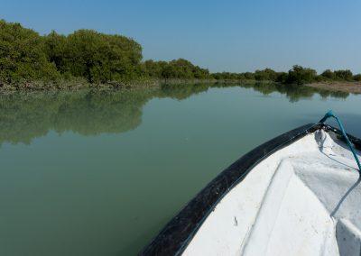 Qeshm Mangrove Forest