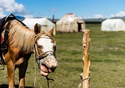 Song Kol Horse