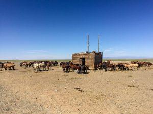 Gobi – Horses