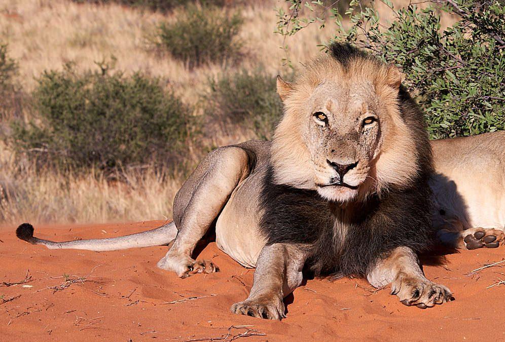 Namibia im Schnelldurchgang