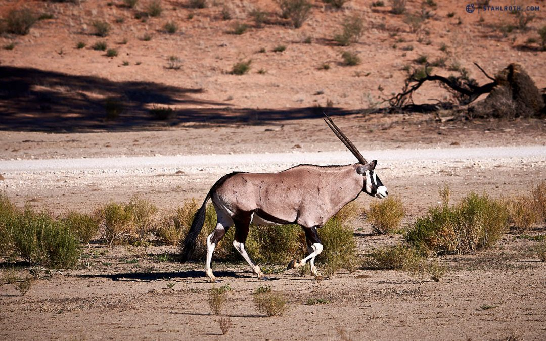 Unterwegs in der Kalahari
