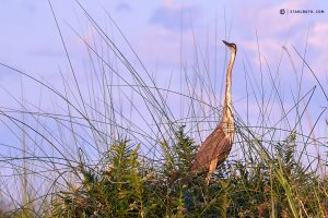 20190426 Bird In Okavango Delta Botswana DSC00057