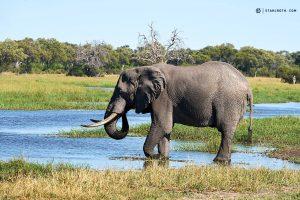 20190428 Elephant At Khwai Botswana DSC0758