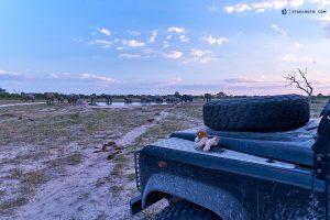 20190429 Landy And Elephants At Savuti Botswana DSC00231