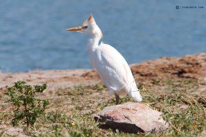 Bird At Chobe River Front