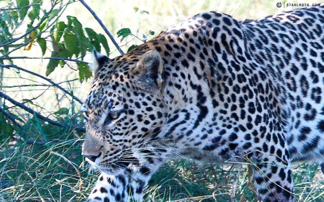 Botswana – Okavango und Chobe