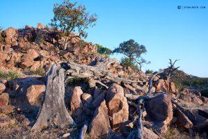 20190513 Landscape At Tuli Block Botswana DSC00690