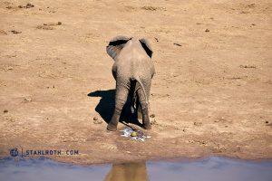 20190519 Kruger NP Elephant South Africa DSC1461