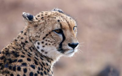 Südafrika – Tiere satt im Kruger Nationalpark