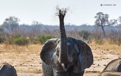 Simbabwe – Hwange Nationalpark