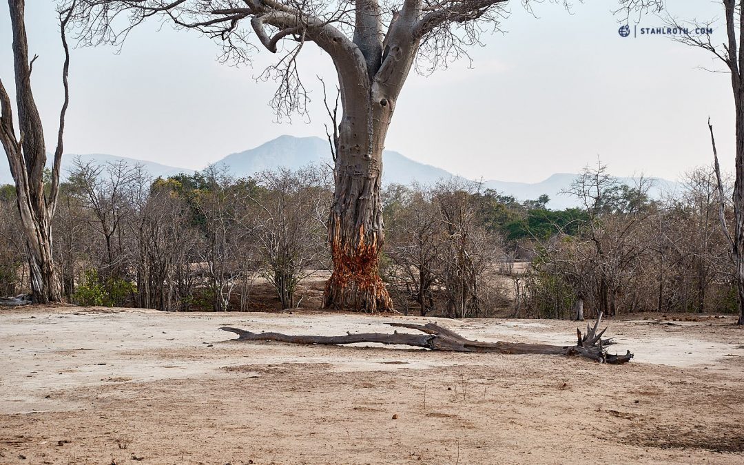 Simbabwe – Mana Pools knochentrocken