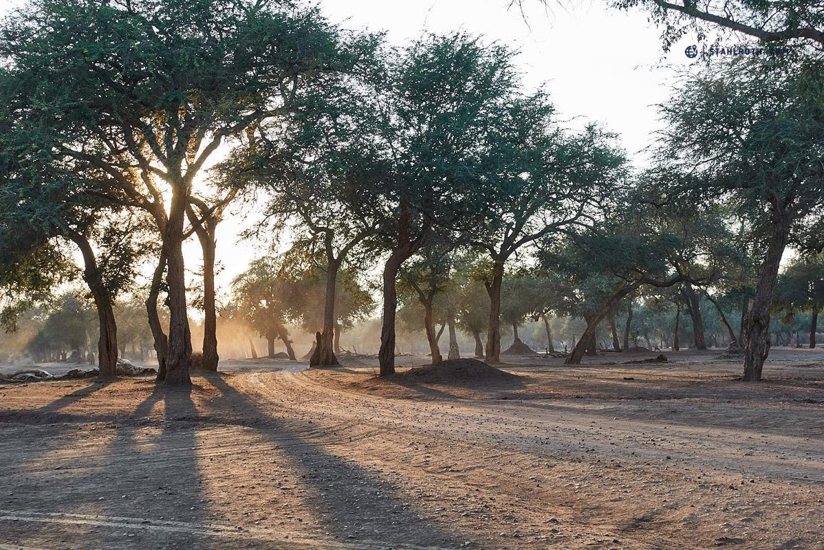 20191009 Mana Pools Landscape Simbabwe DSC00476