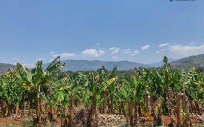 Eastern Highlands – Simbabwes schönste Bergkulisse