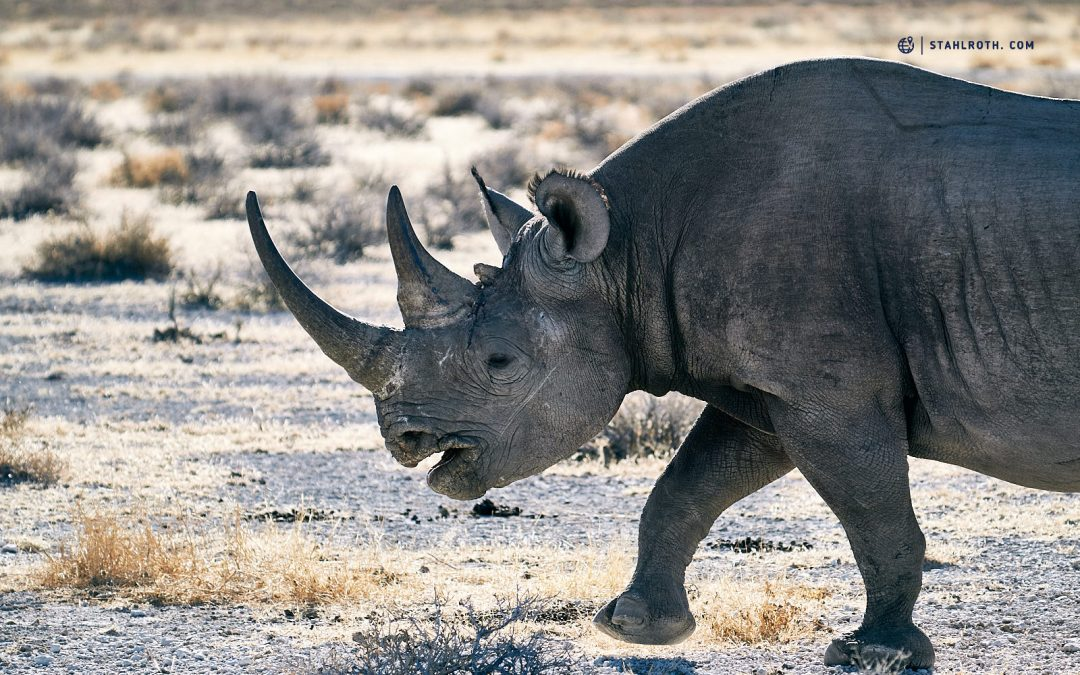 Namibia – Etoscha Nationalpark
